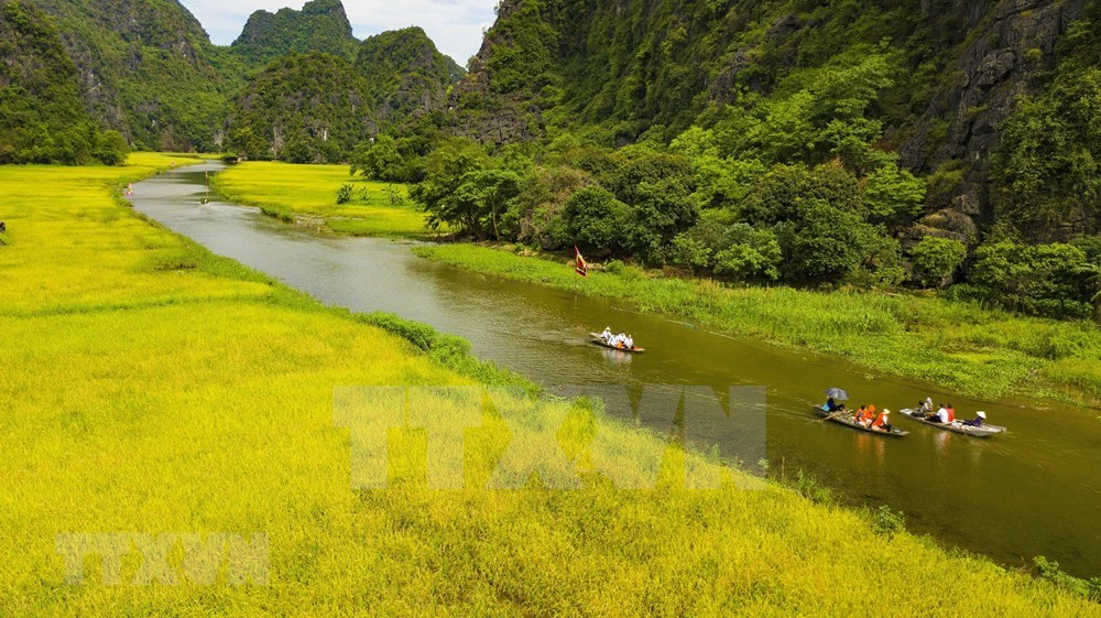Tam Coc – Bich Dong blanketed with ripen paddy fields hinh anh 1