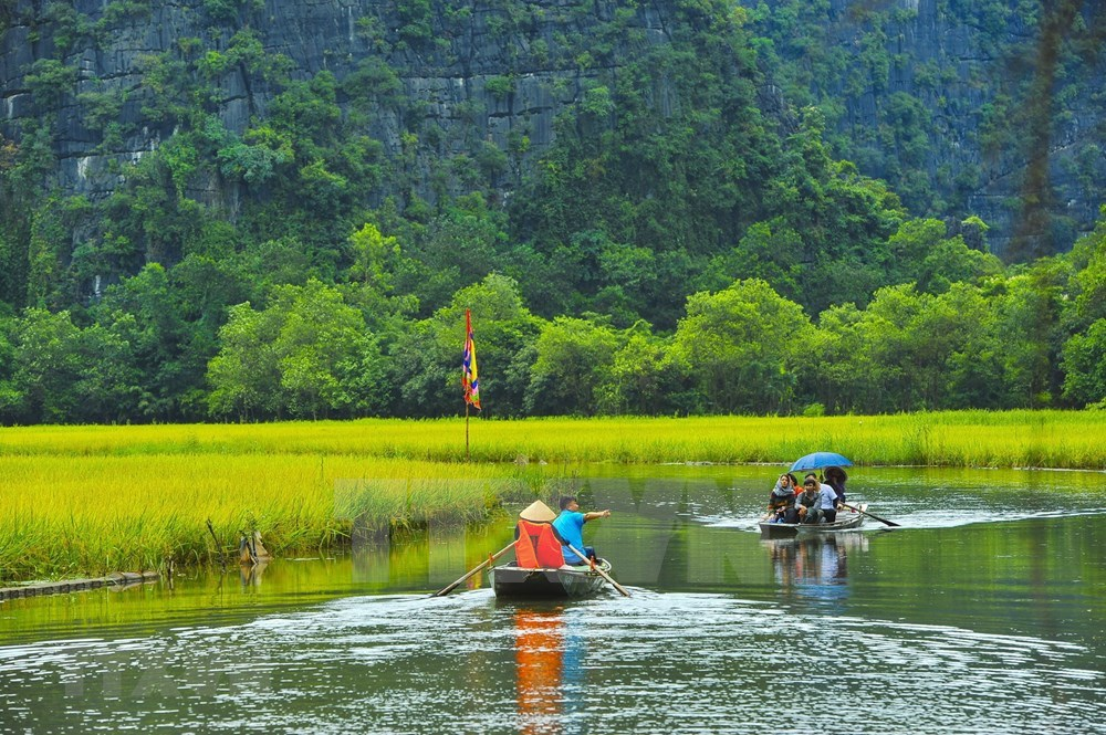 Tam Coc – Bich Dong blanketed with ripen paddy fields hinh anh 3