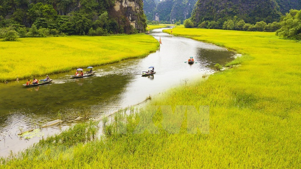 Tam Coc – Bich Dong blanketed with ripen paddy fields hinh anh 6