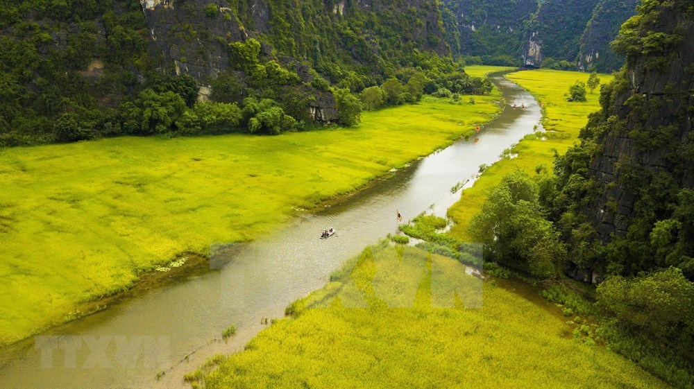 Tam Coc – Bich Dong blanketed with ripen paddy fields hinh anh 7