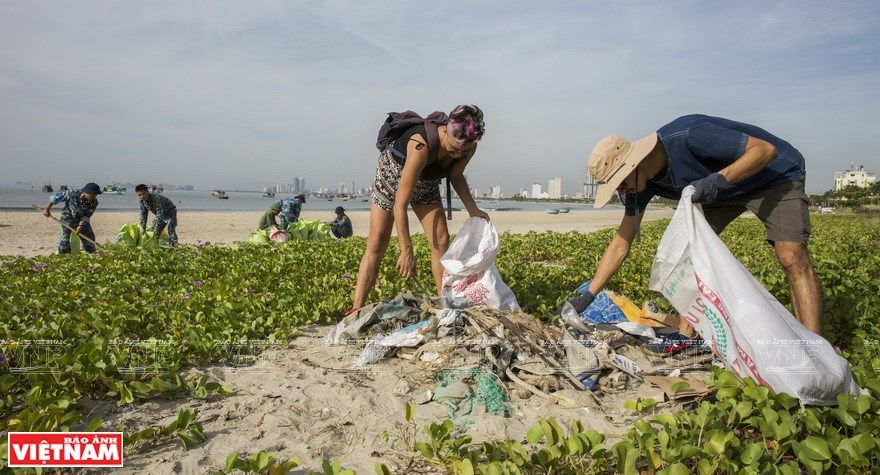 SOS from polluted beaches hinh anh 9