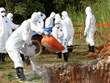 Thai Binh introduces strict control after African swine fever outbreak