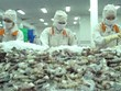 Soc Trang partners with Hiroshima to build clean shrimp brand