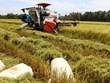 Long An seeks rapid adoption of advanced rice farming techniques