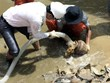 Excavation of ancient ship in Dung Quat Harbour halted