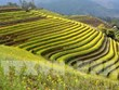 Mu Cang Chai terraced field festival to feature various activities
