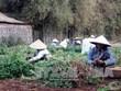 Tra Vinh expands organic peanut farms