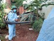 Hanoi strives to control dengue fever by November