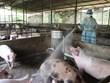 Vietnam, France partner in producing veterinary vaccines