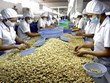 Efforts to maintain Vietnam's leading position in cashew export