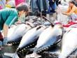 Tuna exports to EU surging