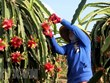 Fruit, vegetable exporters need to focus on policy changes: conference