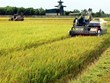 Can Tho int'l workshop seeks to raise farmers' income