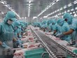 Vietnam concerned about Brazil's rules on aquatic imports