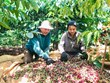 Vietnam looks to bolster agricultural, seafood exports to Algeria, Senegal