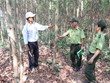 Gia Lai rapidly expands forest cover, helps improve livelihoods