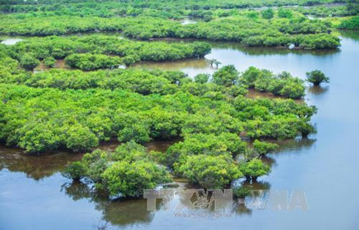 Government issues decree on wetlands conservation