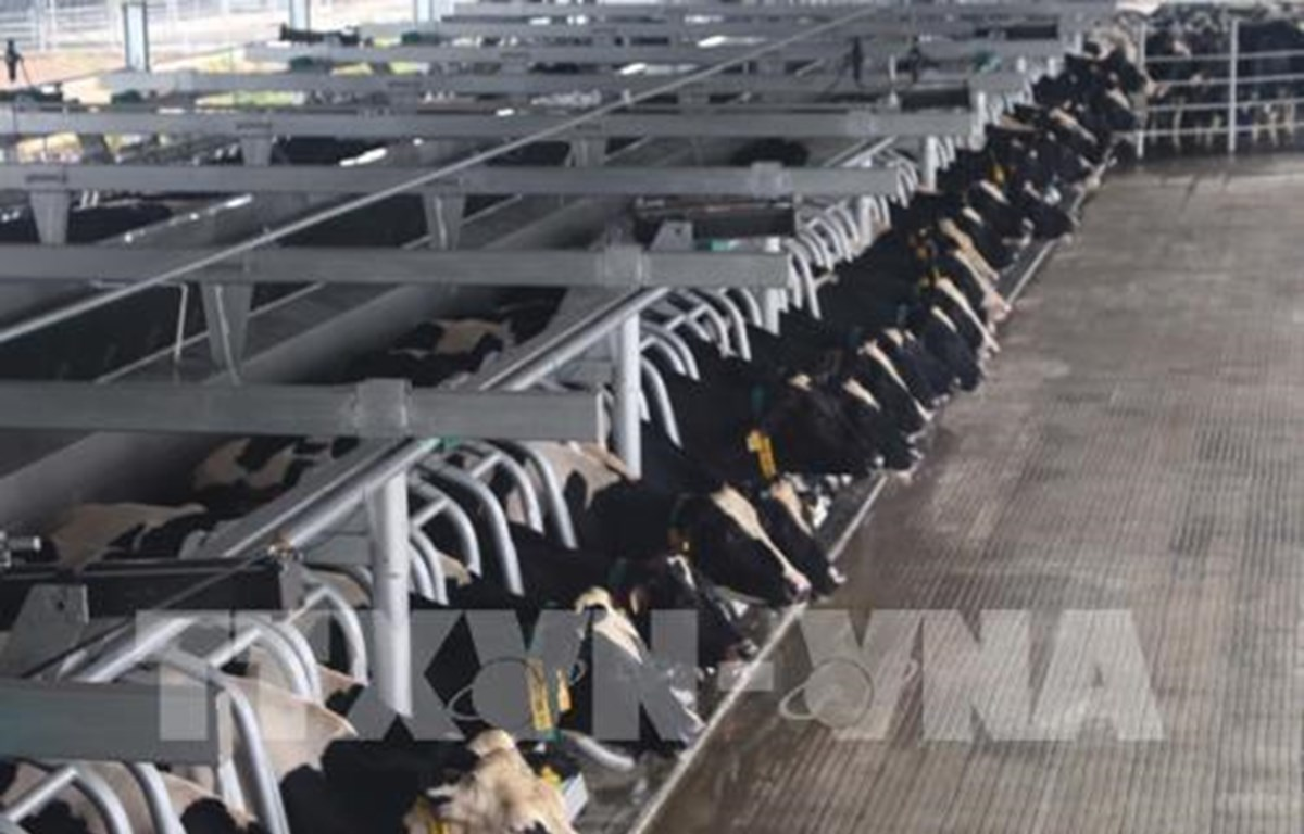 Dairy group to expand cow herd to 400,000 heads