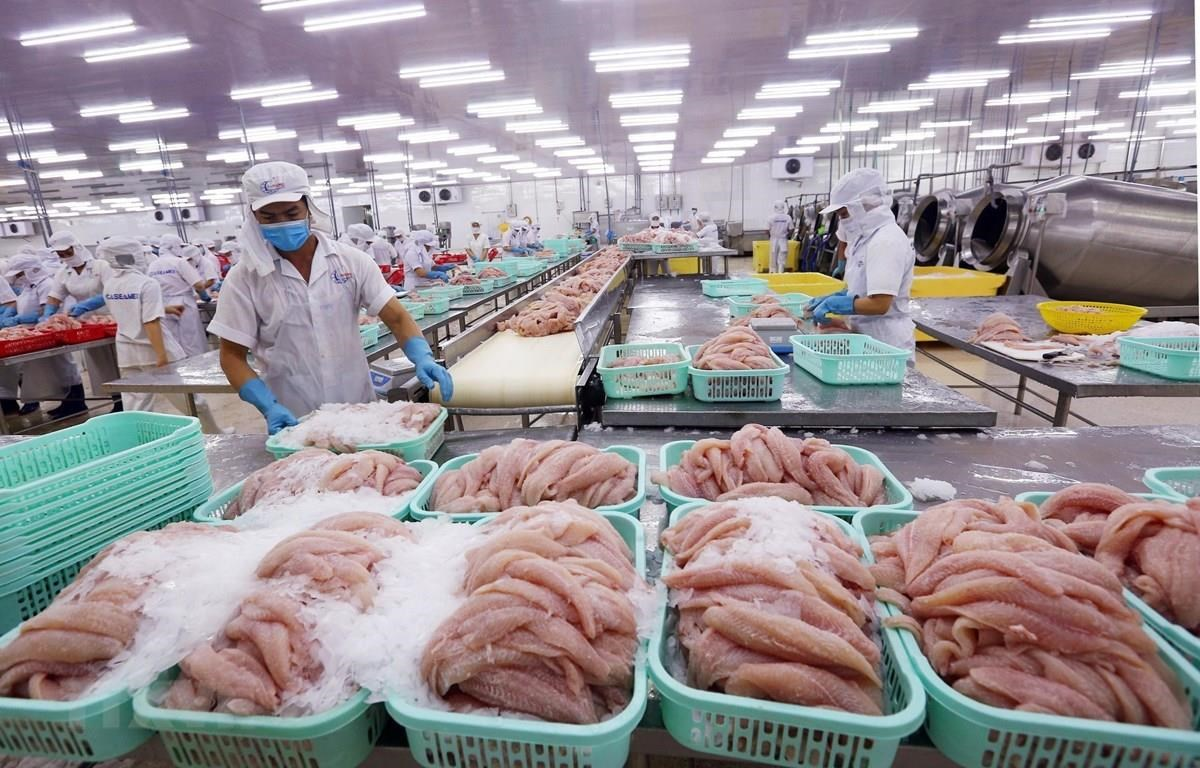 Tra fish processed for exports (Photo: VNA)