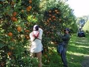 Three Australian fruits to re-enter Vietnamese market