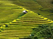 Mu Cang Chai: astonishing destination for tourism