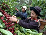 Technology boosts coffee sector growth