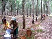 Vietnam's rubber industry needs bounce