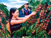 Insurance for coffee trees against natural calamities