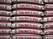 Rice planting workshops for farmers held in northern Thailand