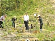 Acacias, shrimps make Quang Ninh farmer rich