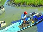 Ca Mau to expand VietGAP mixed rice-prawn farming areas