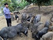 Binh Dinh spends big on animal breeding