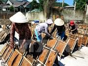 Lao Cai enlarges cinnamon cultivation acreage