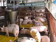 Dak Lak encourages industrialised cattle farming