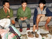 Large-number wild animal traps seized in Quang Binh