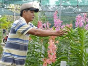 Int'l agency puts forth financial support for Vietnamese agriculture