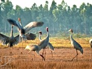 Bird sanctuary in Mekong Delta recognised as national heritage site