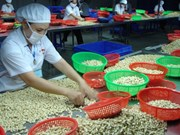 West African delegation looks to study Binh Phuoc's cashew sector