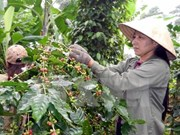 Coffee industry to boost quality, value