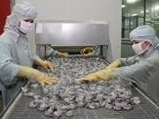 Yearly shrimp export could drop by 1 billion USD