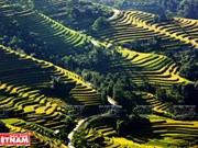 Terraced fields - a man-made wonder