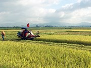 Quang Ninh: two thirds of communes recognised as new rural areas