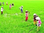 Agricultural value chain development needed in Mekong Delta
