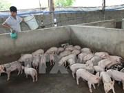 Vietnam successfully produces Porcilis PRRS vaccine