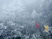 Hoarfrost appears in northern Vietnam