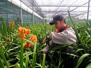 Da Lat to grow flower exports