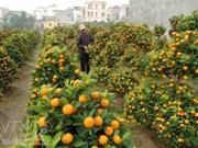 Ornamental plants - indispensable part of Tet