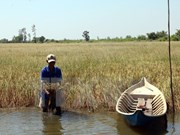 Mekong Delta: Salt intrusion a once-in-a-century disaster