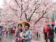 Hoa Binh Park to have 200 Japanese cherry trees