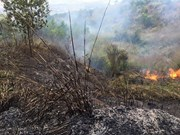 Forest fires rage for hours in Binh Duong, Dien Bien provinces